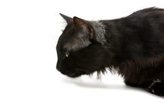 Ascendente próximo do gato Imagem de Stock Royalty Free
