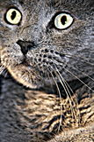 ascendente próximo do gato imagens de stock