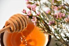 Ascendente próximo do mel e da árvore de Manuka imagem de stock royalty free