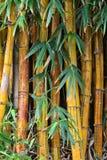 Ascendente pr?ximo do bambu fotos de stock royalty free