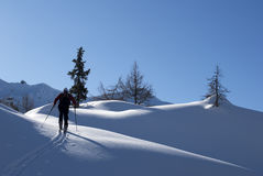 Ascending. Ski mountaineering or cross country skiing in Italian Alps Royalty Free Stock Photo