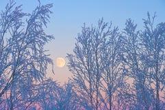 The ascending moon Stock Photos