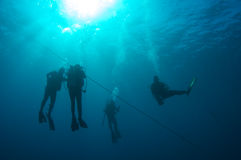 Ascending Scuba Divers Stock Photo