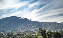 Ascending trees on mountain Stock Images