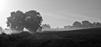 Ascensão do sol do campo do feno Foto de Stock Royalty Free
