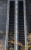 Ascenseurs et feuilles photo stock