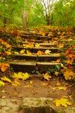 Ascension d'automne Images stock
