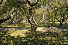 Ascension (Voznesensky) garden Royalty Free Stock Images