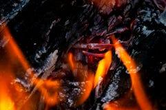 Asche eines Waldbrands Stockfoto