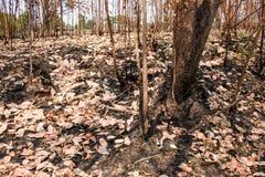 Asche und gebrannter Baum nach Feuer Stockbilder