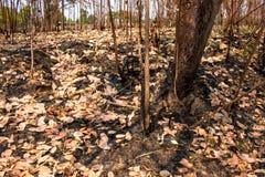 Asche und gebrannter Baum nach Feuer Stockbild