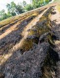 Asche vom Burning des Reisstrohs auf den Gebieten stockfotos