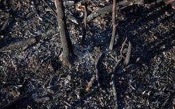 Asche vom Bush-Pinsel-Feuer - gebrannte Schösslinge Stockfotos