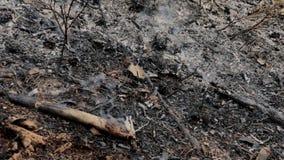 Aschrauch nach dem Waldbrand stock video footage