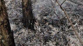 Aschrauch nach dem Waldbrand stock video