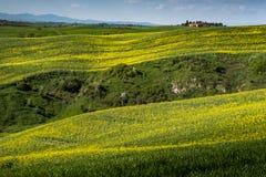 ASCIANO, ΤΟΣΚΑΝΗ, Ιταλία - τοπίο με τα κίτρινα λουλούδια στο Γ Στοκ Εικόνες