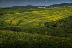 ASCIANO, ΤΟΣΚΑΝΗ, Ιταλία - τοπίο με τα κίτρινα λουλούδια στο Γ Στοκ φωτογραφία με δικαίωμα ελεύθερης χρήσης