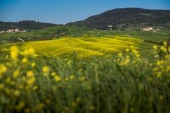 ASCIANO, ΤΟΣΚΑΝΗ, Ιταλία - τοπίο με τα κίτρινα λουλούδια στο Γ Στοκ φωτογραφίες με δικαίωμα ελεύθερης χρήσης