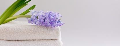 Asciugamani di bagno beige e bianchi e un giacinto violento fresco, insegna immagine stock libera da diritti