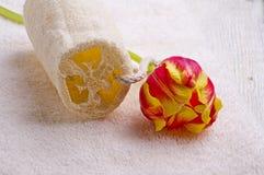 Asciugamano e tulipano Fotografia Stock Libera da Diritti