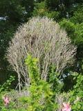 Asciughi con le piante verdi Immagini Stock