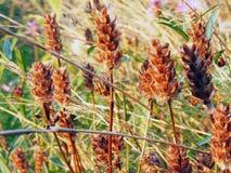 asciughi i fiori Fotografia Stock Libera da Diritti