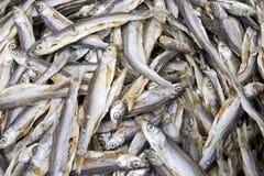 Asciughi i pesci Fotografie Stock