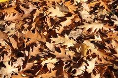 Asciughi il fondo delle foglie fotografia stock