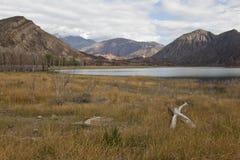 Asciughi il paesaggio alle Ande vicino a Potrerillos. Immagine Stock