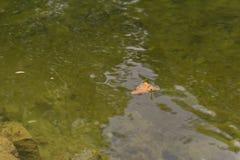 Asciughi il permesso sull'acqua fotografie stock
