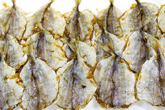 asciughi il pesce Immagine Stock Libera da Diritti