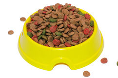 Asciughi l'alimentazione per un gatto Fotografie Stock