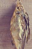 Asciughi l'orata del pesce Fotografia Stock