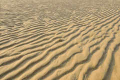 Asciughi la sabbia dorata increspata, ideale per gli ambiti di provenienza Fotografie Stock Libere da Diritti