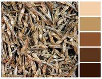 Asciughi la struttura del pesce con i campioni di colore della tavolozza Fotografia Stock Libera da Diritti