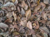 Asciughi la struttura delle foglie su terra Immagine Stock