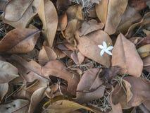 Asciughi la struttura delle foglie su terra Fotografia Stock Libera da Diritti