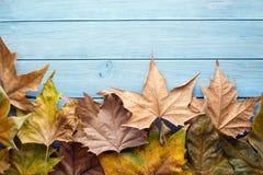 Asciughi le foglie Immagini Stock Libere da Diritti