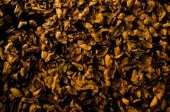 Asciughi le foglie Fotografia Stock Libera da Diritti