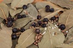 Asciughi le foglie della foglia di alloro con i semi di pepe nero, una foto piacevole per le riviste culinarie Fotografie Stock Libere da Diritti