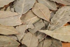 Asciughi le foglie della foglia di alloro con i semi di pepe nero, una foto piacevole per le riviste culinarie Immagine Stock