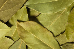 Asciughi le foglie di alloro Immagini Stock Libere da Diritti