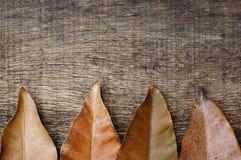 Asciughi le foglie nell'ambito di vecchi precedenti di legno incrinati Fotografia Stock