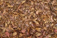 Asciughi le foglie per fondo e strutturi Fotografie Stock