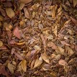 Asciughi le foglie per fondo e strutturi Fotografia Stock