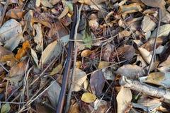 Asciughi le foglie per gli ambiti di provenienza fotografia stock libera da diritti