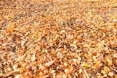 Asciughi le foglie struttura e fondo Fotografia Stock Libera da Diritti