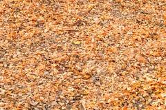 Asciughi le foglie struttura e fondo Immagini Stock