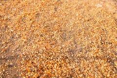 Asciughi le foglie struttura e fondo Fotografia Stock