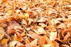 Asciughi le foglie struttura e fondo Immagini Stock Libere da Diritti